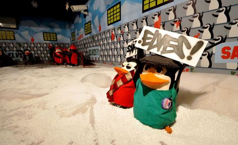 Elf Penguins Snow Dome