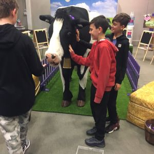 Cadburys Cow Prop