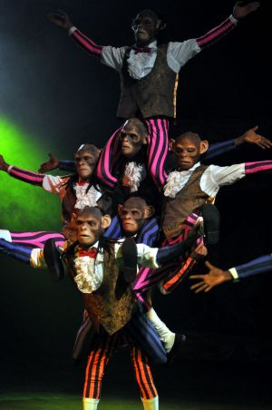 Chimp Acrobats